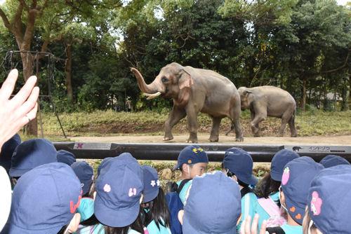 ズーラシア動物園へ遠足