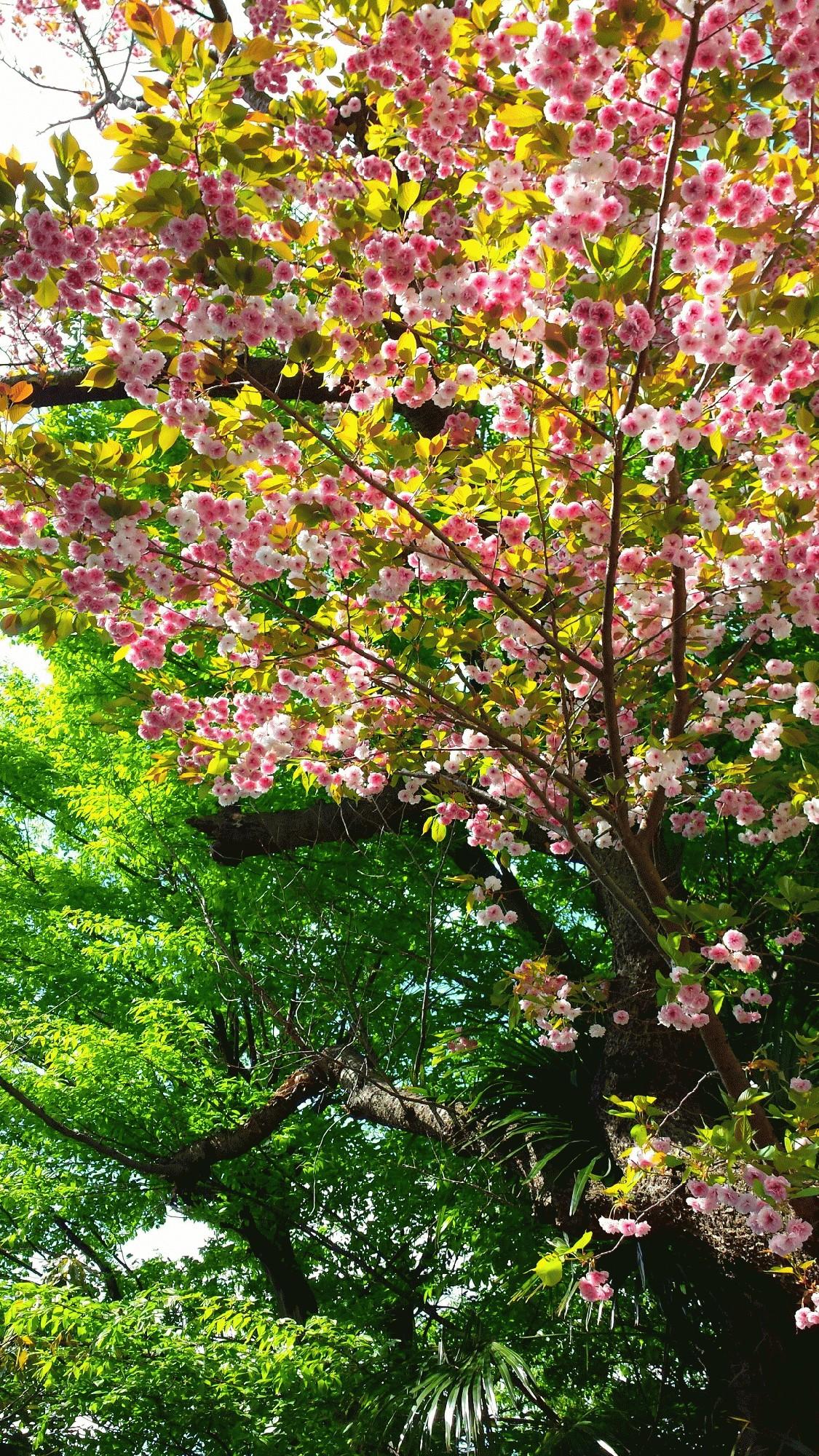 4月26日(水)  将来はお花屋さん!?
