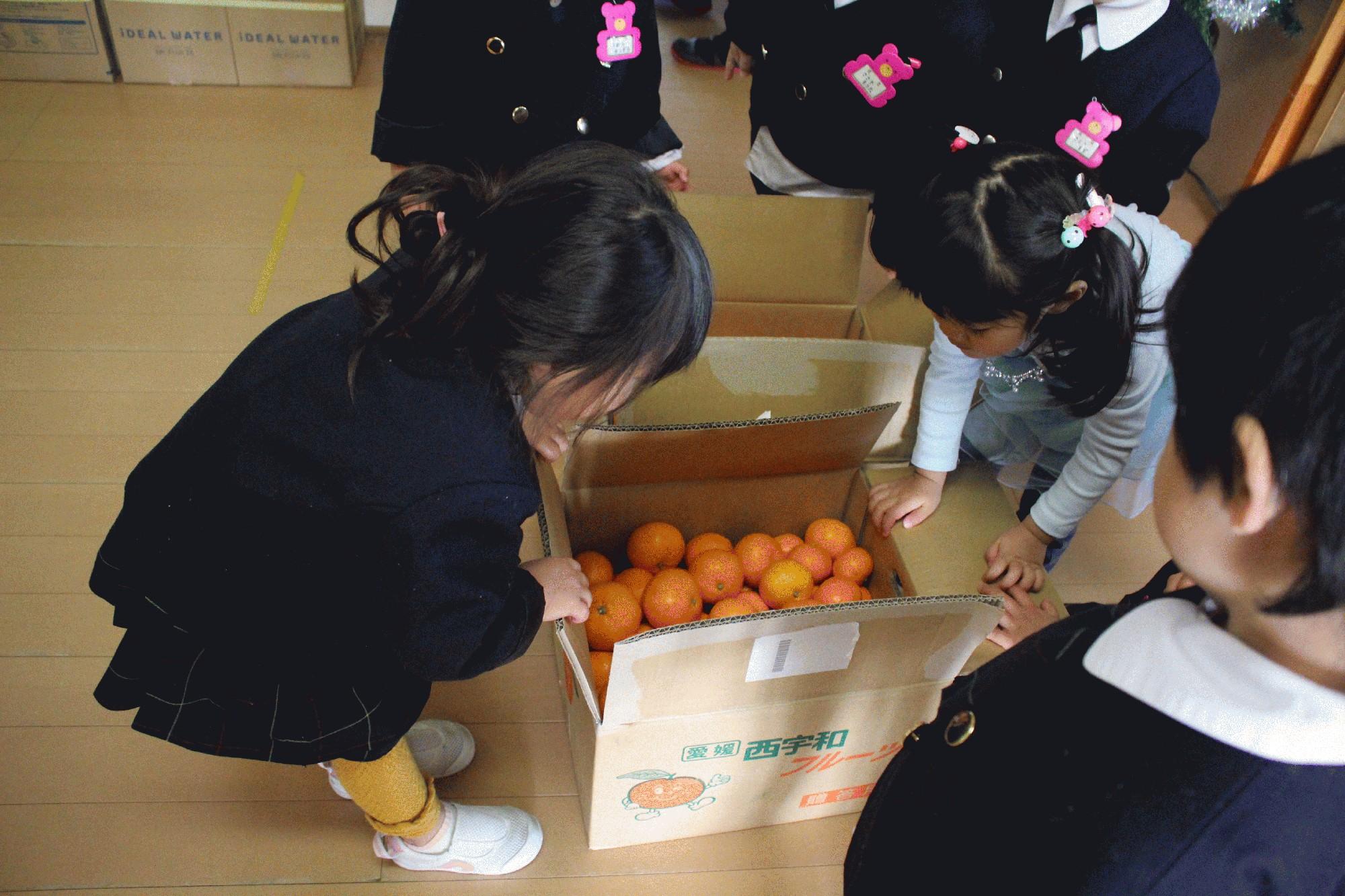 八幡浜幼稚園からみかんが届きました。